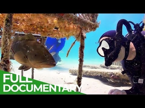 Underwater Coral Farm | Blue World | Free Documentary Nature petworldglobal.com