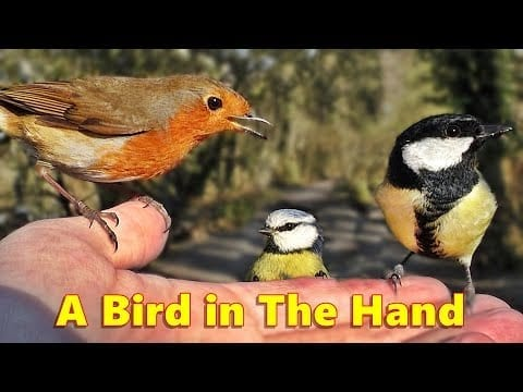 Videos for Cats to Watch : A Bird in The Hand ~ ONE HOUR petworldglobal.com
