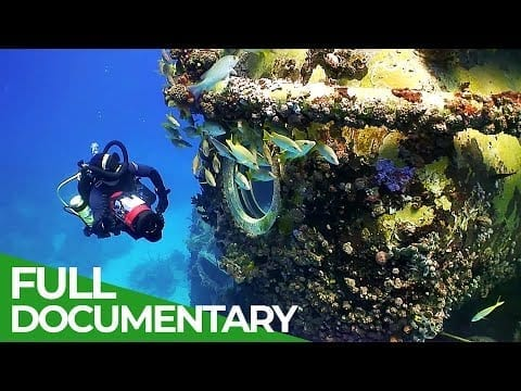 Visting an Undersea Laboratory | Blue World | Free Documentary Nature petworldglobal.com