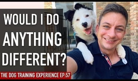 What I would have done differently now that my dog is 1 year old petworldglobal.com