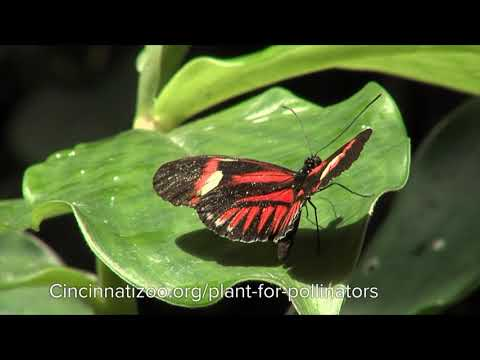 Who are the Pollinators - Cincinnati Zoo petworldglobal.com