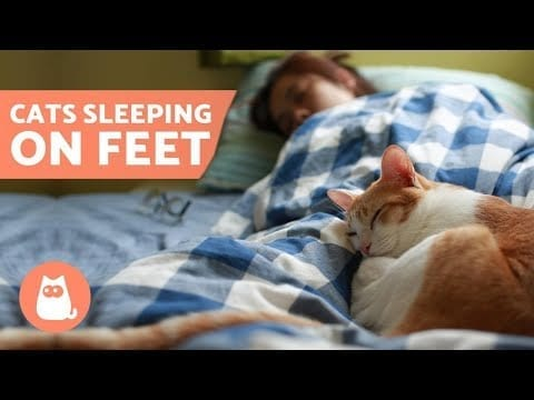 Why Does My CAT SLEEP on My FEET? ???? 5 Reasons! petworldglobal.com