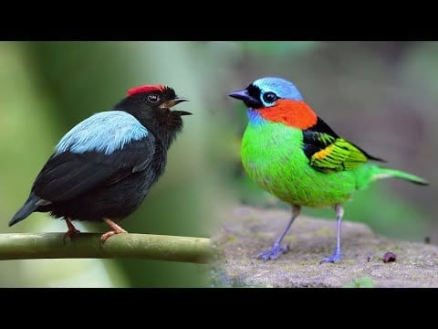 10 Most Beautiful Small Birds in the World #3 petworldglobal.com