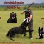 Black German Shepherd Puppies for Sale in Czech Republic petworldglobal.com