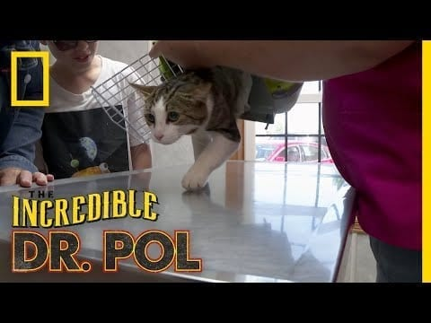 A Meow-tain of Cases | The Incredible Dr. Pol petworldglobal.com
