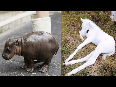 Animals SOO Cute! Cute baby animals Videos Compilation cutest moment of the animals 2020 #1