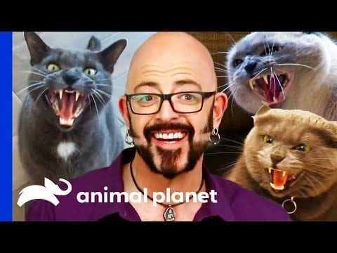 Cats Behaving Badly | My Cat From Hell petworldglobal.com