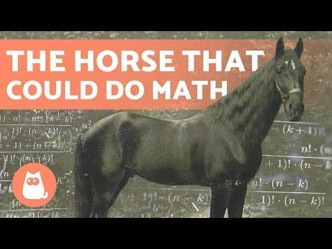 (CLEVER HANS) ?➕ The HORSE That Learned MATHEMATICS petworldglobal.com