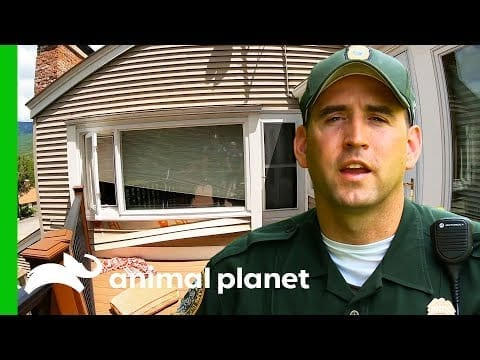 CO Investigates To See If A Bear Is Trapped Inside A House | North Woods Law petworldglobal.com