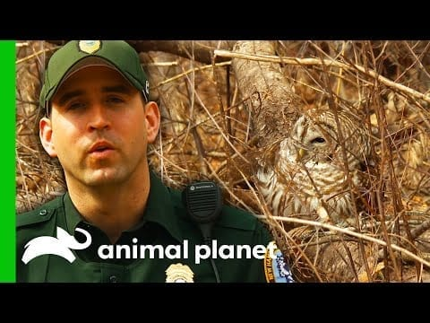 CO Tries To Find Out Why Rescued Owl Can't Fly   North Woods Law petworldglobal.com