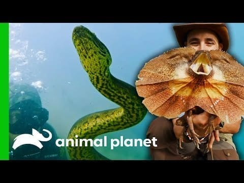 Coyote Faces Some Of The Deadliest Reptiles Around The World   Coyote Peterson: Brave The Wild petworldglobal.com