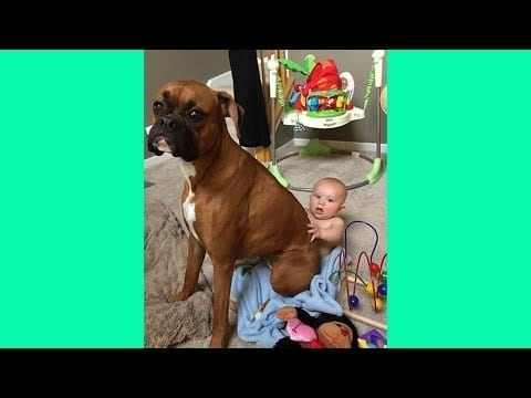 Cute Dogs and Babies are Best Friends ??? Funny Baby and Pets petworldglobal.com