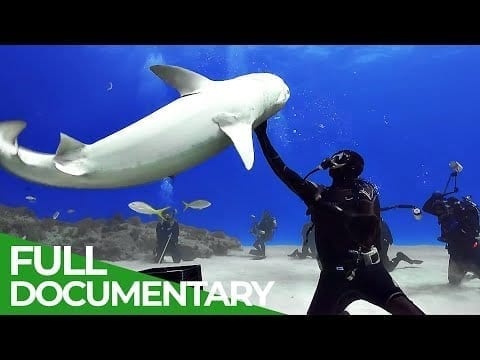 Diving With Tiger Sharks | Blue World | Free Documentary Nature petworldglobal.com