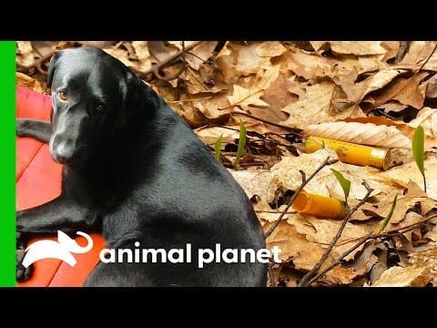 Dog Finds Definitive Evidence Of Shootings Close To The Road | North Woods Law petworldglobal.com