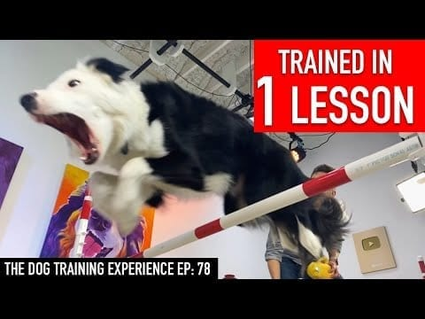 EASILY Train ANY DOG These 2 Impressive Skills! (Jump over something & Weaves!) petworldglobal.com