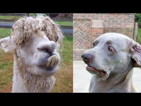 ?Awesome Funny Animals' Life Videos ? Funniest Animals Ever petworldglobal.com