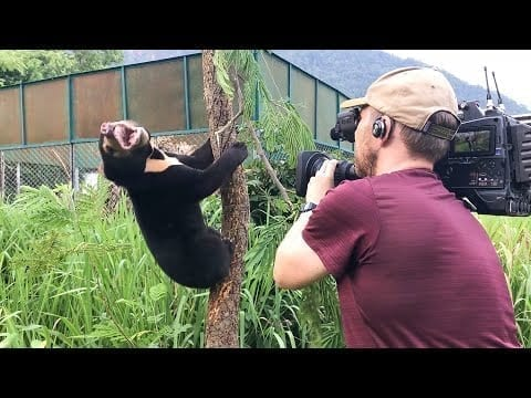Filming Baby Sun Bears Is NOT Easy!   Bears About The House   BBC Earth petworldglobal.com