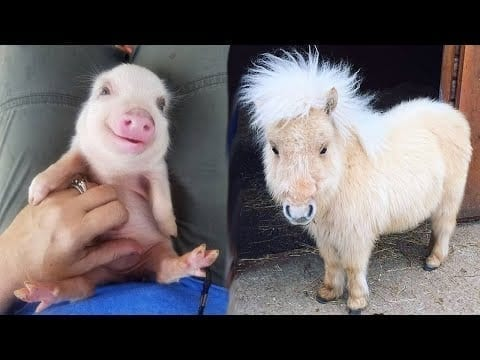 Funniest Animals ? - Best Of The 2020 Funny Animal Videos Compilation ? - Cutest Animals Ever #1 petworldglobal.com