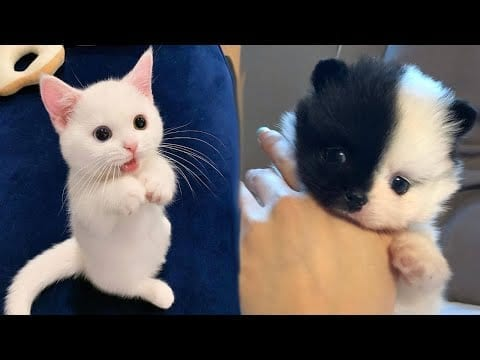 Funniest Puppies & Kitten ? - Best Of The 2020 Funny Dog and Cat Videos Compilation ? #1 petworldglobal.com