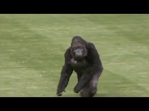 Funny Video - Animals Interfering Sports - MLB Animal Interference petworldglobal.com