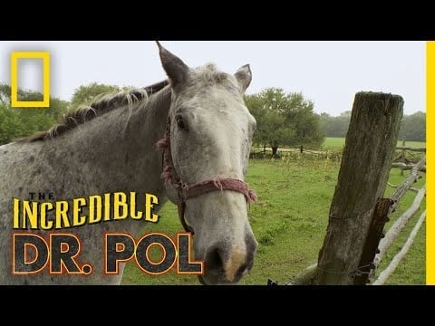 Horse With a Swollen Ankle | The Incredible Dr. Pol petworldglobal.com