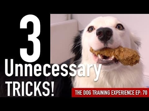 How to Train 3 Tricks I've NEVER Taught to a Dog Before! petworldglobal.com