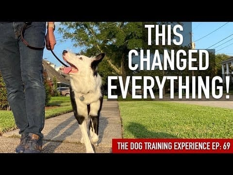 How to Train the 1 Thing That's Made All the Difference in My Leash Training petworldglobal.com