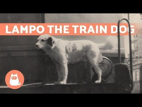 LAMPO - The Rail Traveling Dog ?? petworldglobal.com