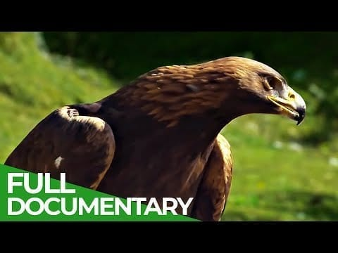 Last Paradises: A Journey to the Most Beautiful Places On Earth | Free Documentary Nature petworldglobal.com