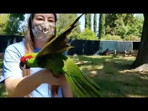 Live from Sac Zoo with the parrots petworldglobal.com