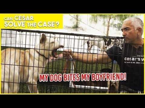 MY DOG BITES MY BOYFRIEND!! | Cesar Solves the Case | Limited Series petworldglobal.com