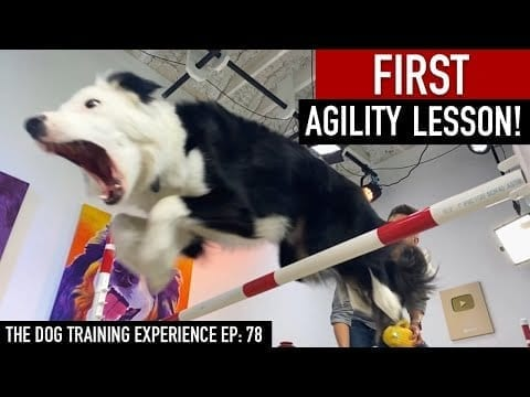 My Dog's FIRST Agility Lesson! petworldglobal.com