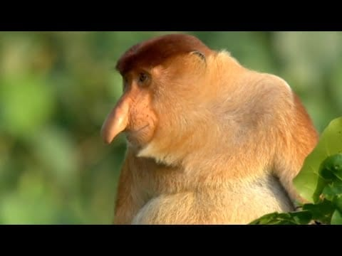 Nature's Oddest Looking Animals | Top 5 | BBC Earth petworldglobal.com