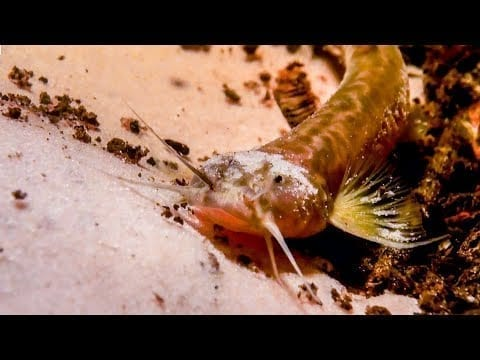 Pink Catfish Discovered In Mountain Cave   The Dark: Nature's Nighttime World   BBC Earth petworldglobal.com