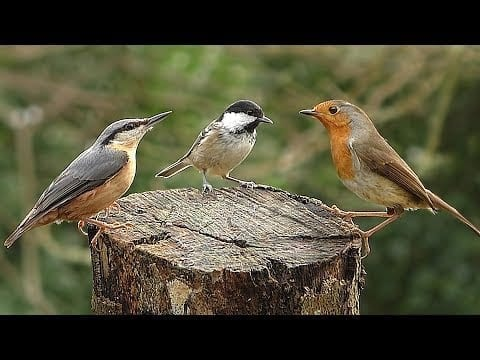 Slow Motion Birds ~ Robin, Nuthatch, Chaffinch, Blue Tit, Coal Tit and Great Tit petworldglobal.com