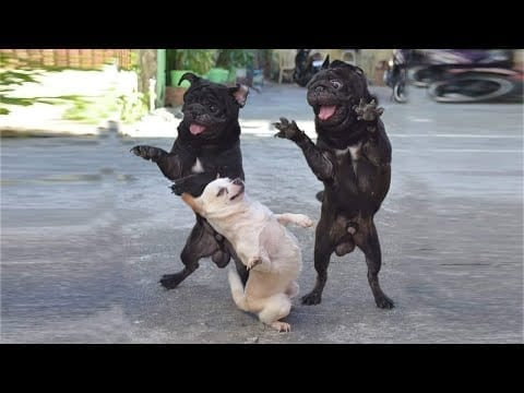 The CUTEST and FUNNIEST DOGS ??? LAUGHING with Dog's Life ! petworldglobal.com
