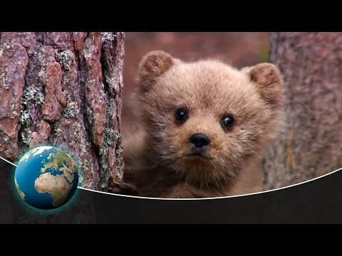 The most emotional moments of wildlife filmmakers petworldglobal.com