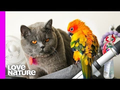 This Parrot Spends All Her Time Playing With A Cat | Oddest Animal Friendships | Love Nature petworldglobal.com