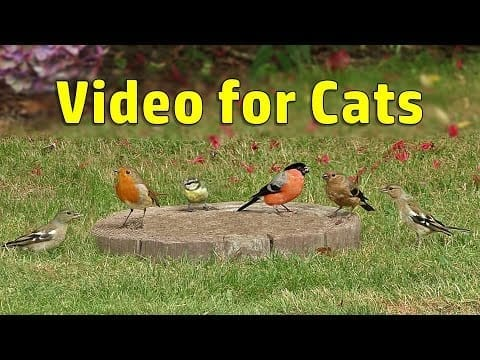 Video for Cats to Watch - Follow The Birds - Cat Games and Entertainment for Cats 8 HOURS ⭐ NEW petworldglobal.com