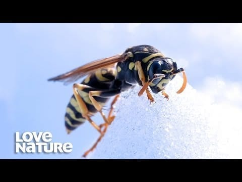 What Happens To Bugs In Winter? | Survival of the Weirdest | Love Nature petworldglobal.com