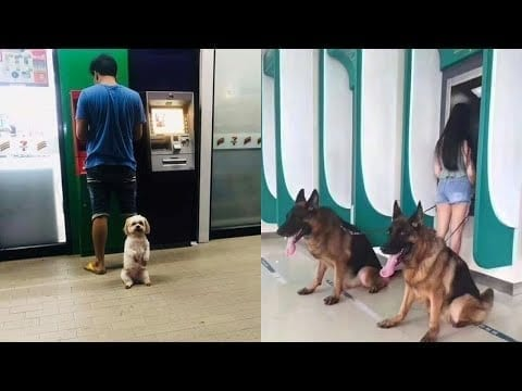 What is more loyal than a dog ! ??‍?‍?‍? Dog protects their owner out of any danger Compilation petworldglobal.com