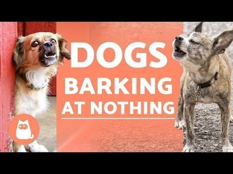 Why Do DOGS BARK at NOTHING? ??️❗ (+ Solutions) petworldglobal.com