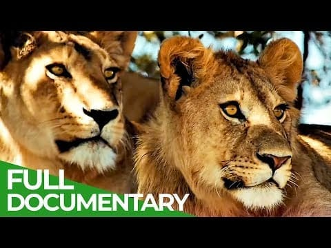 Wildlife Laws: The Better Hunter Wins | Free Documentary Nature petworldglobal.com