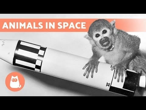 10 ANIMALS That TRAVELED to SPACE ?️? petworldglobal.com