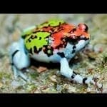 10 Most Beautiful Frogs in the World petworldglobal.com
