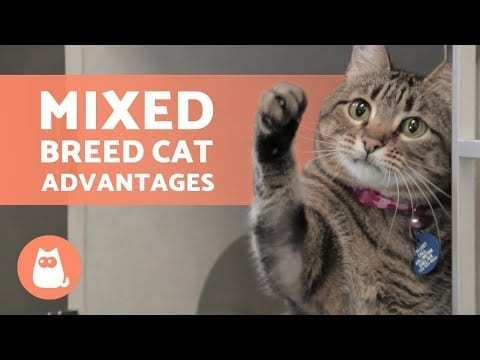 5 ADVANTAGES of ADOPTING a MIXED BREED CAT ? Discover the Domestic Breed! ❣️ petworldglobal.com