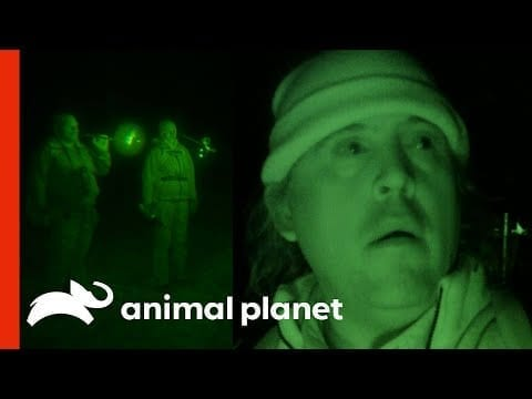 A Mysterious Creature Answers The Team's Calls | Finding Bigfoot petworldglobal.com
