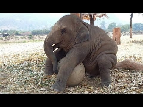 Cute baby Elephant doing Funny things ??? Cutest baby animals Video petworldglobal.com