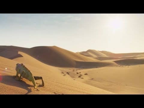 Decompress In The Dunes - Change   Mindful Escapes   BBC Earth petworldglobal.com