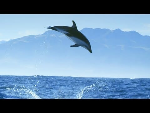 Diving With Dolphins - Joy | Mindful Escapes | BBC Earth petworldglobal.com